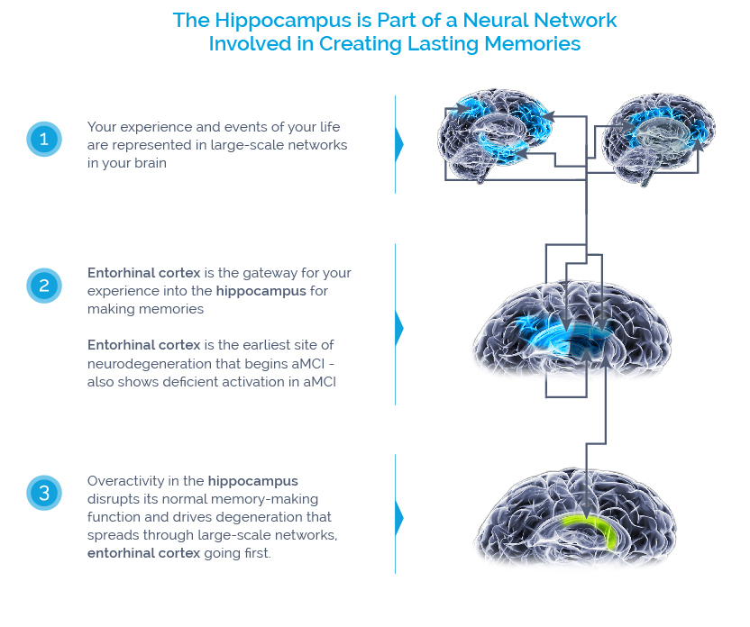 Diagram Hippocampus Agenebio Developing Innovative Therapeutics